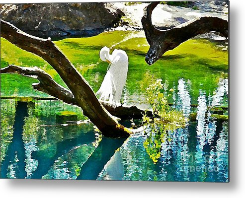 Egret Metal Print featuring the photograph Preening Watercolor by Carol Bradley