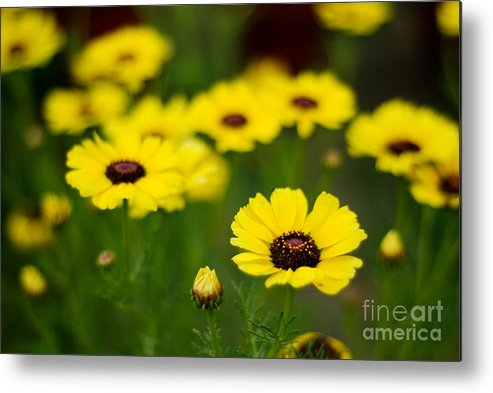 Flower Metal Print featuring the photograph Pretty Yellow by Syed Aqueel