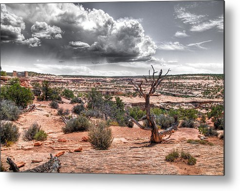 Utah Metal Print featuring the photograph Reaching For The Sky by David M Lynnes