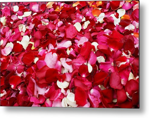 Rose Metal Print featuring the photograph Rose Petals by Gregory Smith