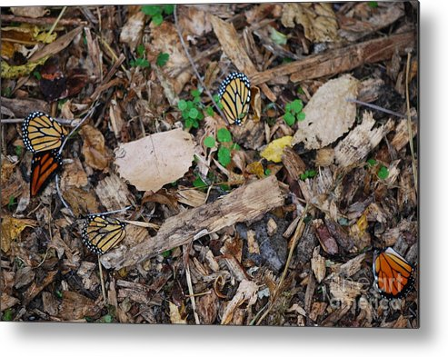 Butterfly Wings Metal Print featuring the photograph The Fallen Butterfly Wings by Joy Bradley