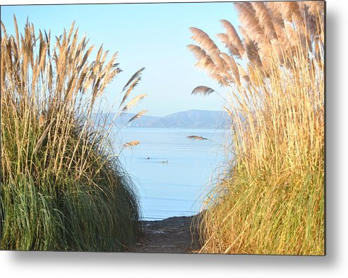 Alameda Metal Print featuring the photograph Through The Clearing by Nimmi Solomon