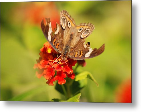 Butterfly Metal Print featuring the photograph Torn Wings Full Of Life by Kathy Gibbons