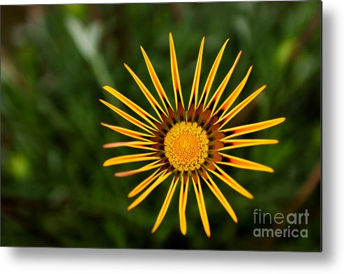Flower Metal Print featuring the photograph Twinkle Twinkle by Syed Aqueel