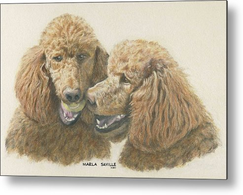 Poodle Paintings Metal Print featuring the painting Uhh...i Think That's Mine by Marla Saville