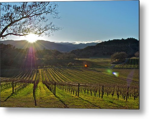 Metal Print featuring the photograph Vines by Lori Leigh