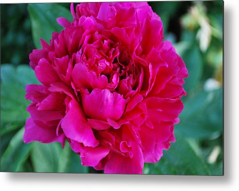 Nature Metal Print featuring the photograph Virginia Tech Peace Garden 3 by Roseanne Lafferty