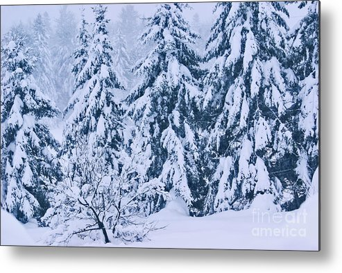 winter Prints Metal Print featuring the photograph Winter Coat by Aimelle
