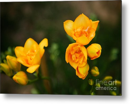Flower Metal Print featuring the photograph Yellow Flowers by Syed Aqueel