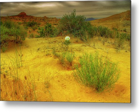 Landscape Metal Print featuring the photograph Desert Rose by Stephen Campbell