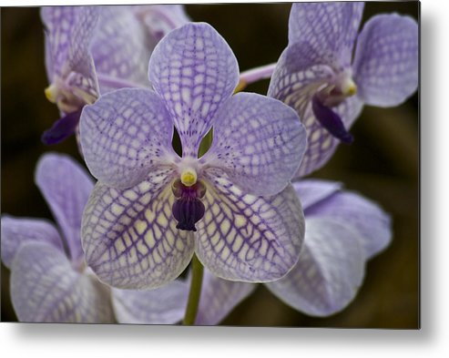 Purple Orchids Metal Print featuring the photograph Purple Orchids by Michael Peychich