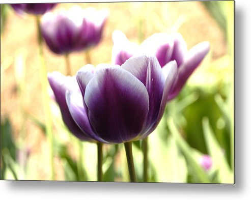 Tulips Metal Print featuring the photograph Tulips by Jessica Wakefield