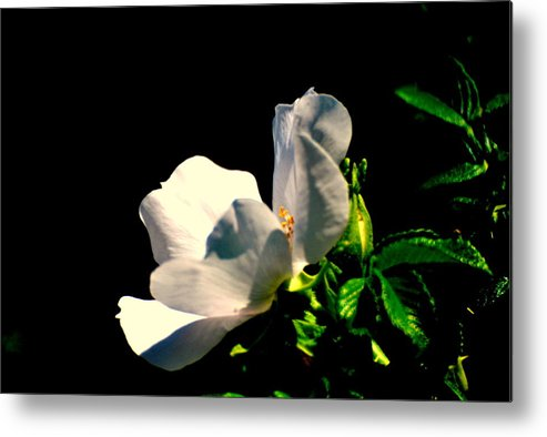 Metal Print featuring the photograph White Flower by Robert Scauzillo