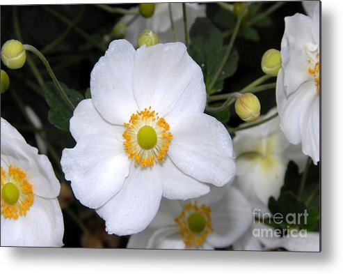 White Metal Print featuring the photograph White Wonder by David Lee Thompson