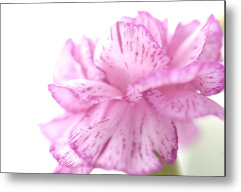 Pink Metal Print featuring the photograph Flower Abstract by Jessica Wakefield