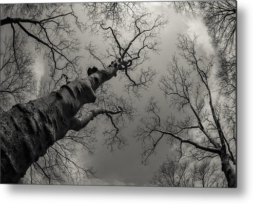 B&w Metal Print featuring the photograph Looking Up by Dorota Niezgoda