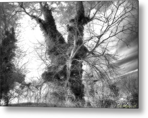 2d Metal Print featuring the photograph The Tree by Brian Wallace