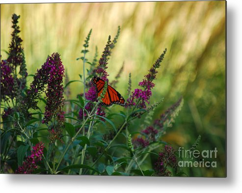 Monarch Metal Print featuring the photograph A Touch Of Orange by Lori Tambakis