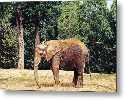 Animals Metal Print featuring the photograph African Baby by Jan Amiss Photography