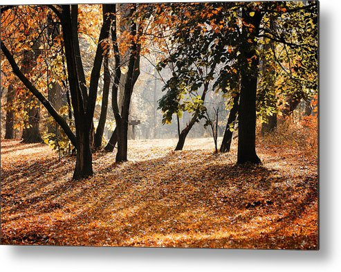 Morning Metal Print featuring the photograph Autumn In The Park by Andriy Zolotoiy