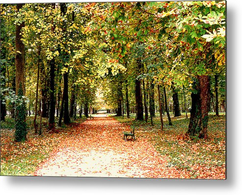 Autumn Metal Print featuring the photograph Autumn In The Park by Nancy Mueller