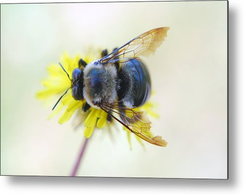 Bee Metal Print featuring the photograph bee by Erik Berglund