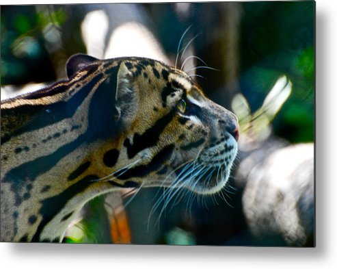 Big Cat Metal Print featuring the photograph Big Cat by Gene Sizemore