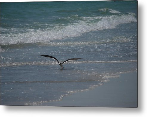 Birds Metal Print featuring the photograph Bird Flying In The Surf by Lisa Gabrius