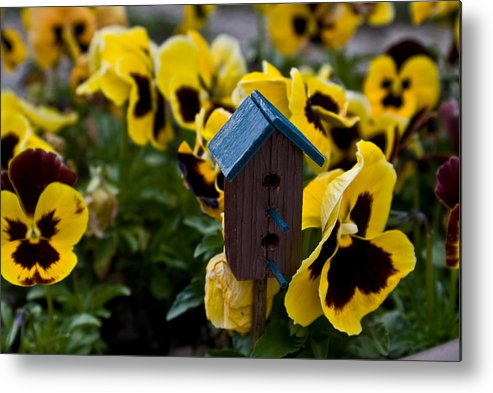 Bird Metal Print featuring the photograph Bird House And Pansies by Douglas Barnett