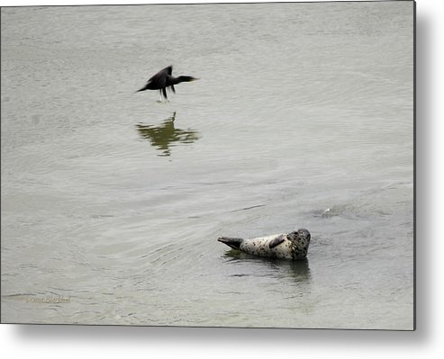 Seal Metal Print featuring the photograph Bird Watching by Donna Blackhall