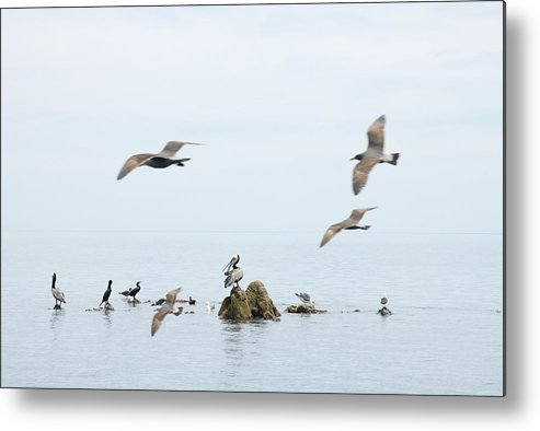 Seagull Metal Print featuring the photograph Birds by Elisa Locci