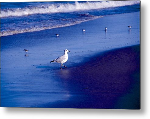Ocean Metal Print featuring the photograph Birds On Beach by George Ferrell