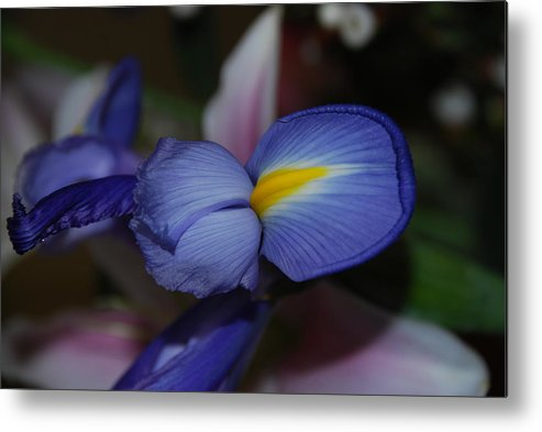 Flowers Metal Print featuring the photograph Blue And Yellow Fun by Michael L Gentile