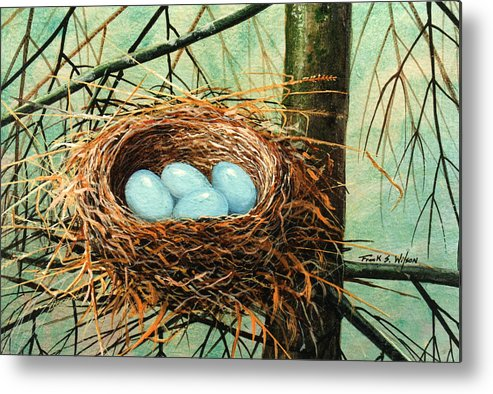 Wildlife Metal Print featuring the painting Blue Eggs In Nest by Frank Wilson