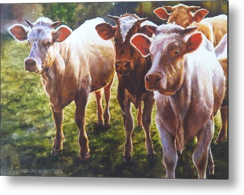 Animals Metal Print featuring the painting Bovine Curiosity by Marion Hylton