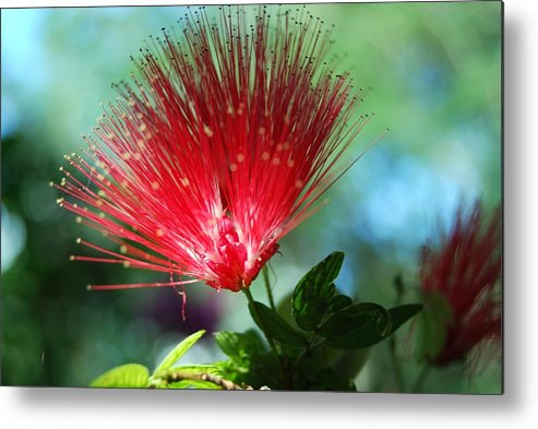 Flower Metal Print featuring the photograph Brilliance by Peter McIntosh