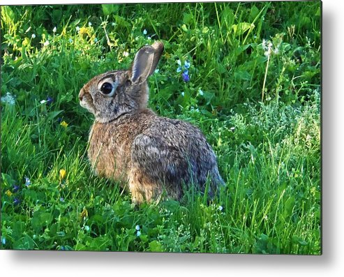 Rabbit Metal Print featuring the photograph Brow Pencil by Cassandra Dice