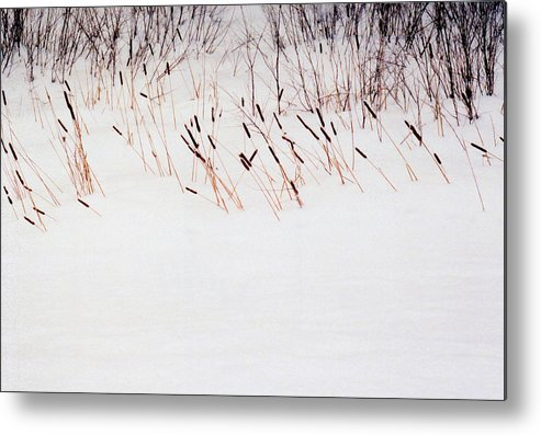 Winter Metal Print featuring the photograph Bull Rushes In The Snow Db by Lyle Crump