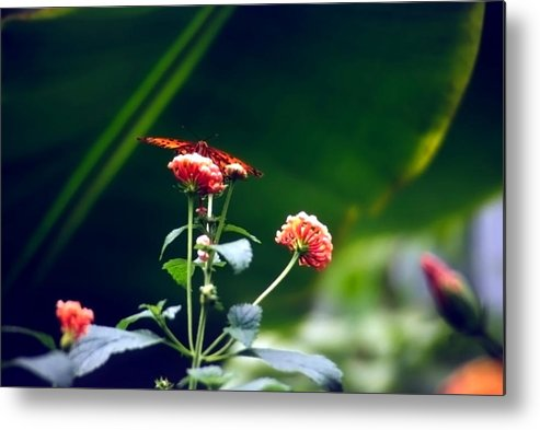 Butterfly; Insect; Flowers; Orange Metal Print featuring the photograph Butterfly On Flower by Steve Ohlsen