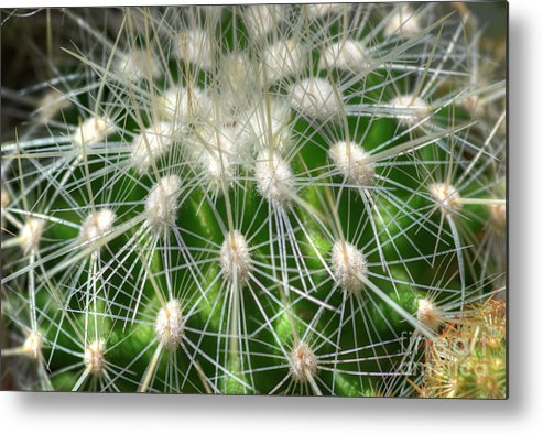 Cactus Metal Print featuring the photograph Cactus 1 by Jim And Emily Bush
