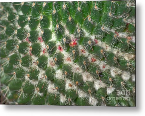 Cactus Metal Print featuring the photograph Cactus 5 by Jim And Emily Bush