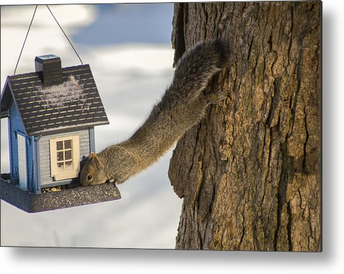 Wildlife Metal Print featuring the photograph Caught At The Bird Feeder by Jim Bembinster