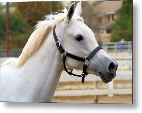 Horse Metal Print featuring the photograph Cloud by Ellen Lerner ODonnell