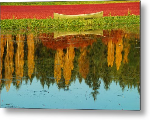 Yellow Point Cranberries Metal Print featuring the photograph Cranberry Fields by Diane Smith