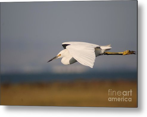 Animal Metal Print featuring the photograph Crane by Catherine Lau