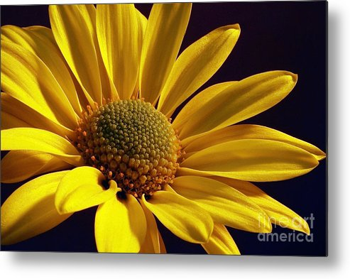 Flower Metal Print featuring the photograph Daisy by Lois Bryan