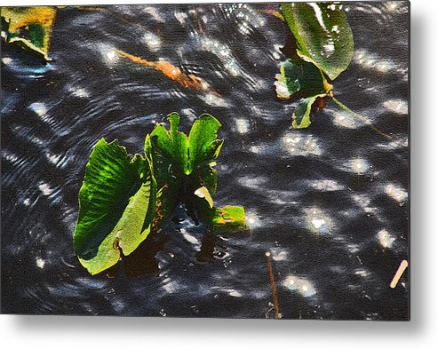 Leafs Metal Print featuring the photograph Dancing Sunlight by Susanne Van Hulst