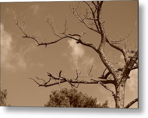 Sepia Metal Print featuring the photograph Dead Wood by Rob Hans