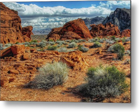 Landscape Metal Print featuring the photograph Desert Plantlife by Stephen Campbell