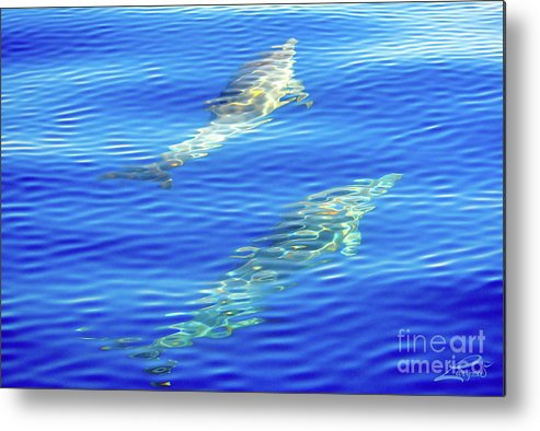 Dolphin Metal Print featuring the photograph Dolphin Illusion by Laryssa Densmore
